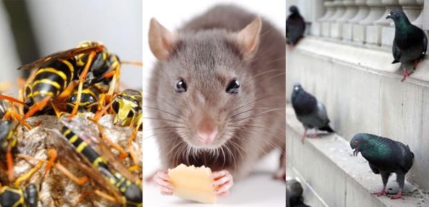 West And North Vancouver Pest Control Experts