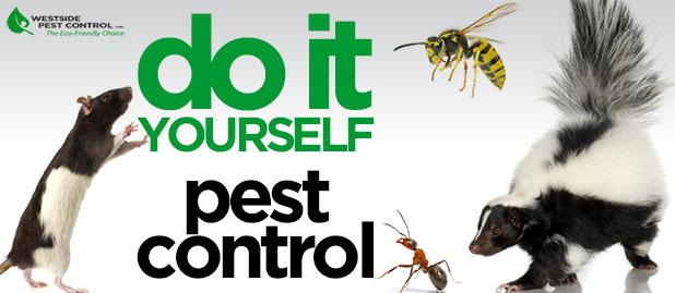 diy-pest-control-sm