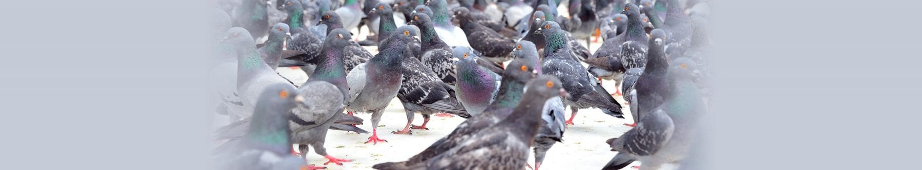 bird control vancouver bc