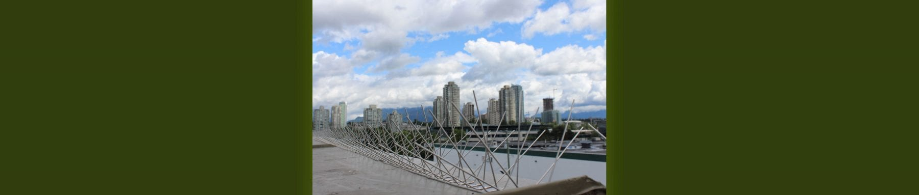 10-bird-control-spikes-in-vancouver-bc-1-(1)