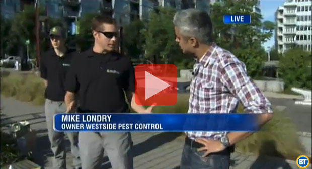 Mike shows how to do your own wasp control on Breakfast Television in Vancouver