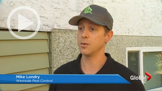 Westside Pest on Global TV