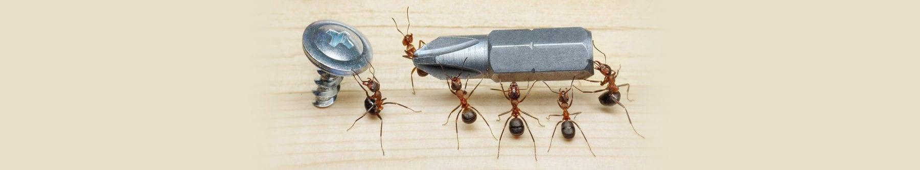 carpenter ant control Metro Vancouver, BC - Westside Pest Control