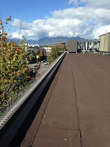 commercial industrial bird control Metro Vancouver, BC - Westside Pest Control