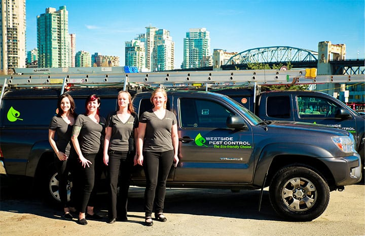 Pest Control Experts Metro Vancouver, BC - Westside Pest Control