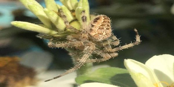 spider control surrey BC - Westside Pest Control