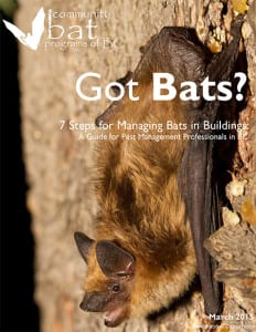 Bat Control Metro Vancouver, BC - Westside Pest Control