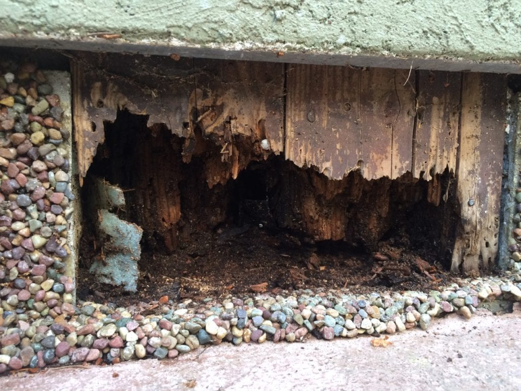 Dampwood termite removal North Vancouver, BC - Westside Pest Control