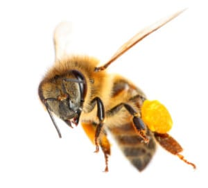 Bees and Wasp Control in Richmond, BC