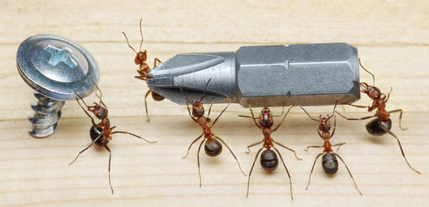 Carpenter Ant Control Surrey, BC - Westside Pest Control