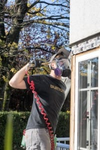 removing carpenter ant colony in surrey bc