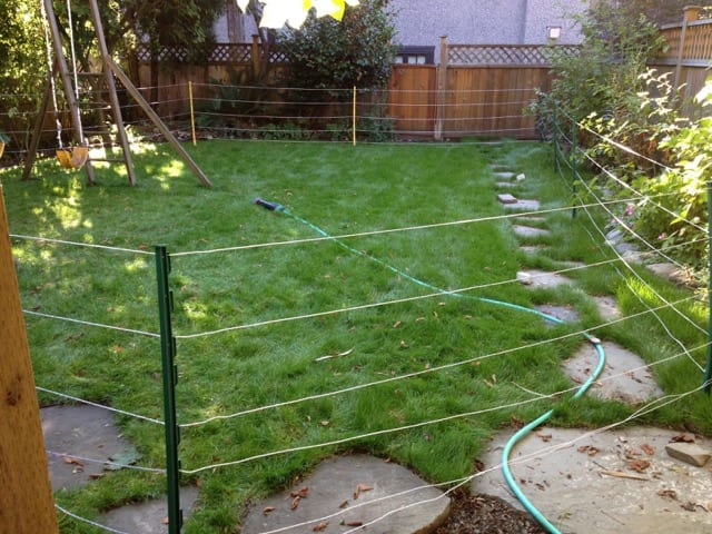 A Temporary Electric Fence for Racoon Control in Surrey, BC by Westside Pest Control Ltd.