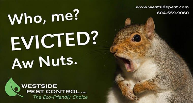 Squirrel Control Richmond, BC - Westside Pest Control
