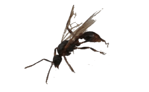 Insect control Vancouver - Westside Pest Control