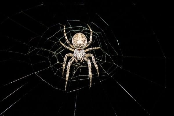 Spider-Control-Vancouver-BC-Westside-Pest-Control