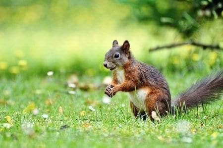 Squirrel Removal North Amp West Vancouver Bc Call For A