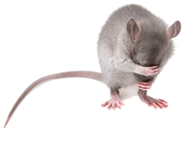 mice-removal-in-vancouver