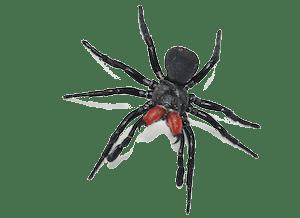 western-black-spider-westside-pest-control