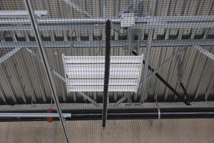 Bird Removal Burnaby - Westside Pest Control