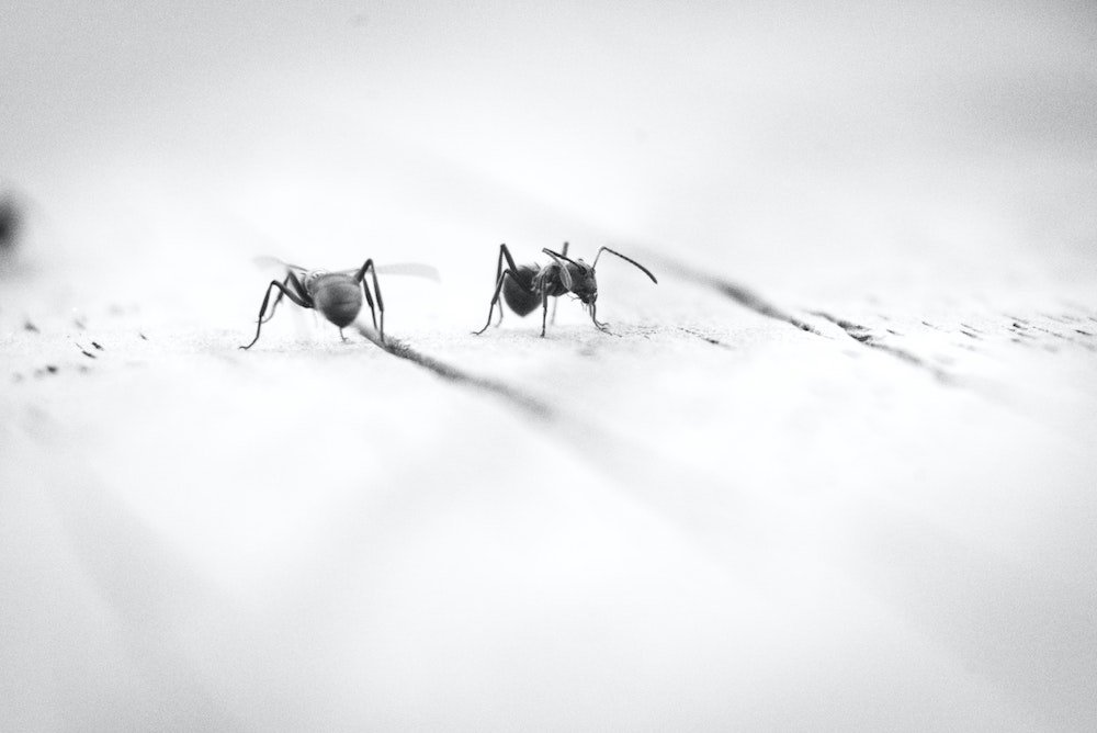 What Sort Of Ants Do You Have - Westside Pest Control Blog