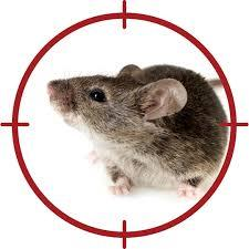 Mouse Exterminator Tips - Westside Pest Control