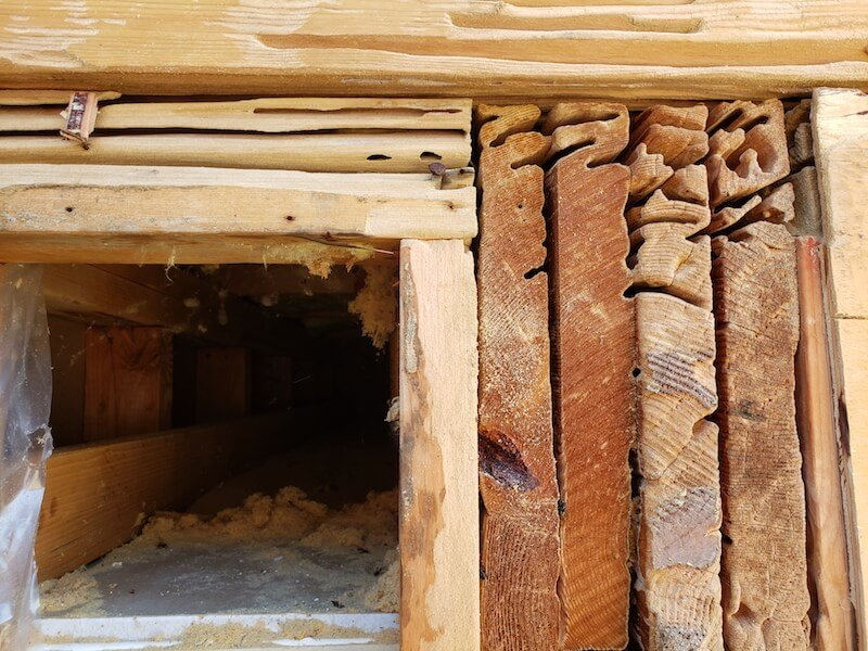 Carpenter Ant Removal - Wood Structure Damage - Westside Pest Control