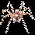 Spider Control - Westside Pest Control