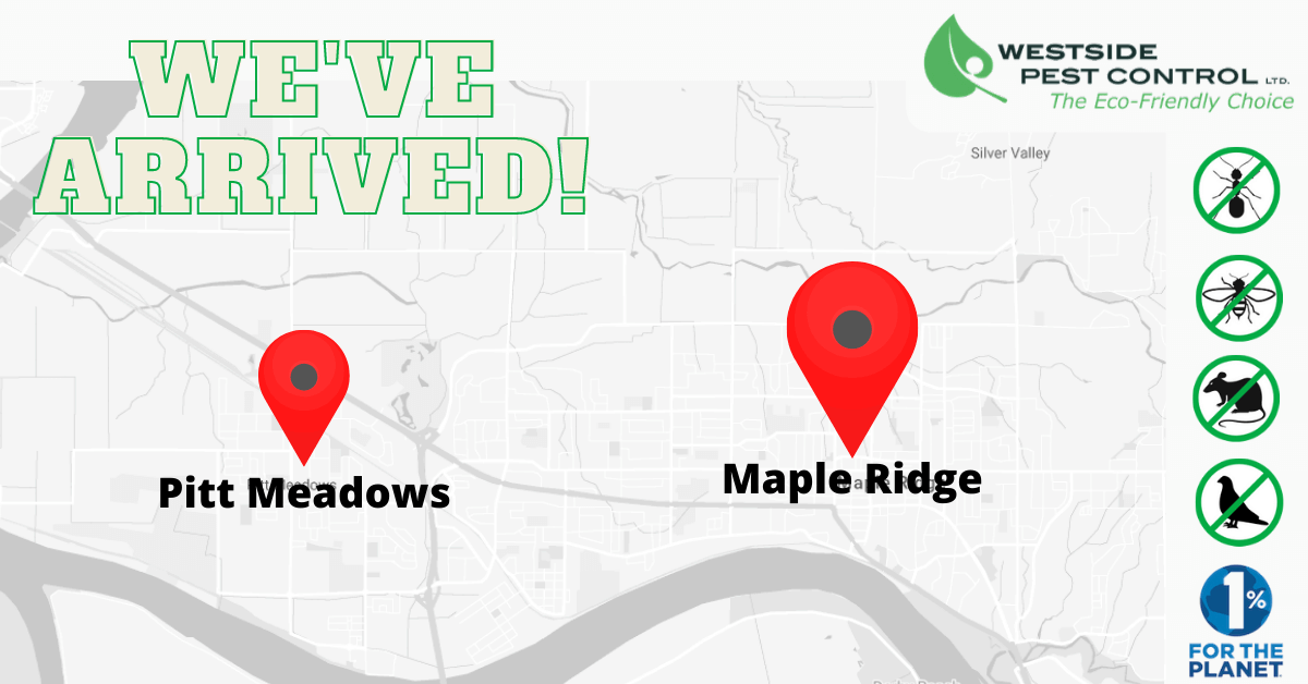 maple ridge pest control service - new location